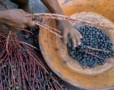 Does the Acai Berry Diet aid weight loss?